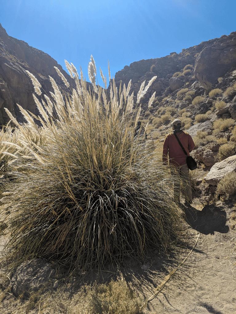 Hike through Quebrada de Guatin/Guatin Canyon to the Puritama Hot Springs.