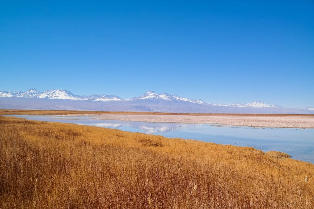Colorful grass and mountain views near Laguna Cejar in the Atacama Desert.